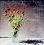 Tulips 4 by rogue-designer