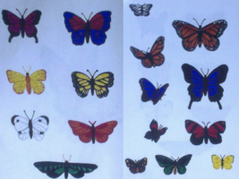 Butterfly Practice by ATGB3x3