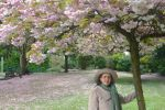 Mrs a* Musing At Cherry 2017 Blossom Viewing by aegiandyad