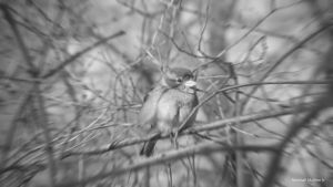 Bird (radius blur) by Msquare13