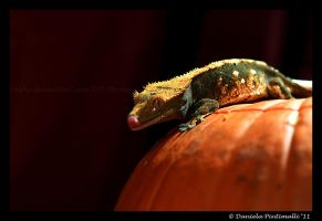 Crested Gecko by TVD-Photography