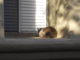 Sleeping Cat on the Window Sill by angelskissme