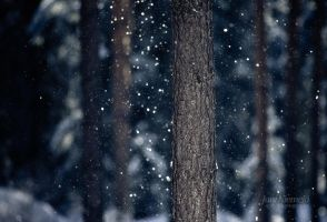 Snowshower II by Nitrok