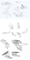 Wing Practice by DarkFlame75