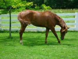 Berich Horse 5 - Cool by Freedom-Falling