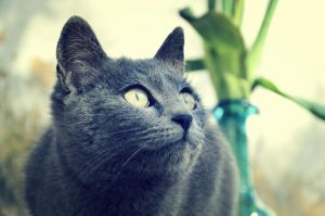 Gazing Cat  by squirrel-chaser