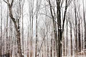 winter trees by black--balloon