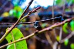 Dropping Dew Drops by alyssaleung