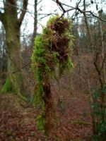 hanging moss by harrietbaxter