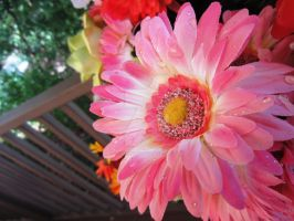 Pink Daisy by quickwing23