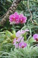 Orchids 1 by miss-masami