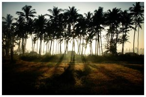 Sunrise in the Woods by waiaung