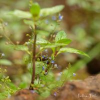 When tiny droplets bring life. by Indian-Tribe