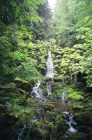 water Fall In Fundy Park by asaph70
