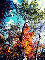 Fall Colors by evelynrosalia