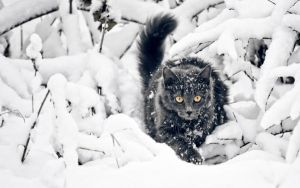 Cat Hunting in Snow by legacyandcrok