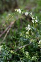 Little white flowers 02 by Paalinka
