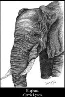 Speed Sketch Elephant by carriephlyons
