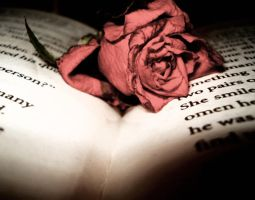 Rose on book. by Soukster