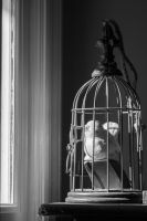 Caged by adamchris1992