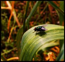 mosca by pedromiguelgomes