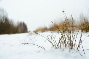 Snowy grass by MarioVV