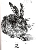 A Hare by Baphomiss