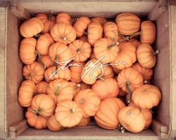 Citrouilles by TheTruthSeeker