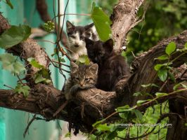 One Flew Over A Kittens' Nest by eMBeeL