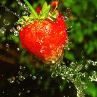 Strawberry Splash by And-I-Walk-Alone