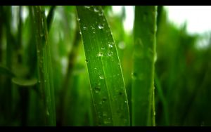 Pearly Greens - 1680 x 1050 by beanhugger