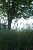 Grass and Tree by ArcherKitteh