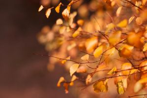 Autumn Leaves by Kaltenbrunner