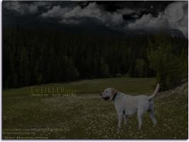 eveiller by oceancoralgraphics