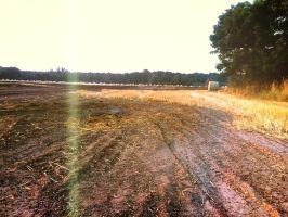 Field by Isaaca