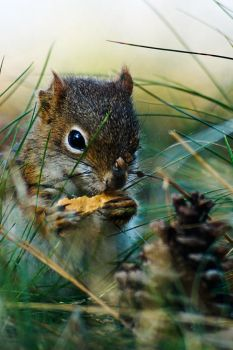 Dopey the Red Squirrel by BrianWolfe