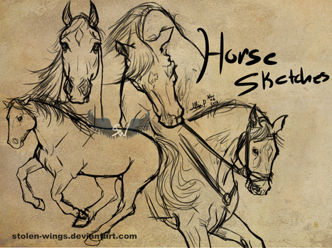 Horse sketches_01 by Stolen-Wings