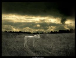wolf by SHUME-1