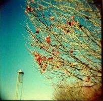 Lomography by LittleLyingDelilah