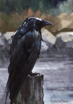 Wet crow by SatynaPaper
