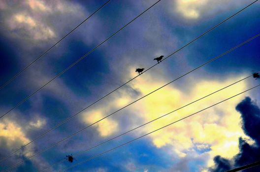 Birds on the wire by MythInABottle