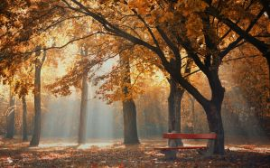 Come to Light by ildiko-neer