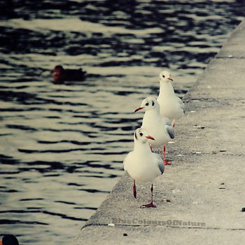 common guys this way by BlueColoursOfNature