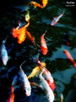 carp by airge