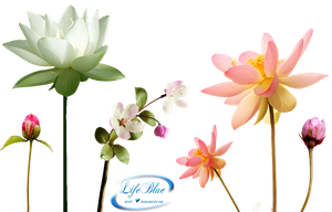Fragrance of flowers - PNG by lifeblue