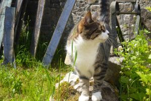 Tissington Village Cat by Candyfloss-Unicorn