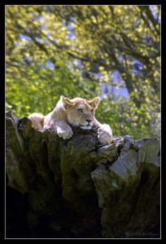 Lazy Days by Prince-Photography