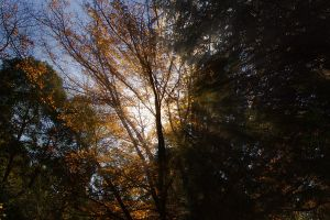 Autumns Afternoon by Dryad-8