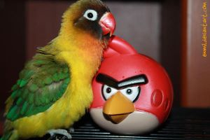 Pence and angry bird by emmil