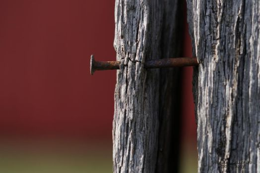 Rust and Red by wendy-pellerito